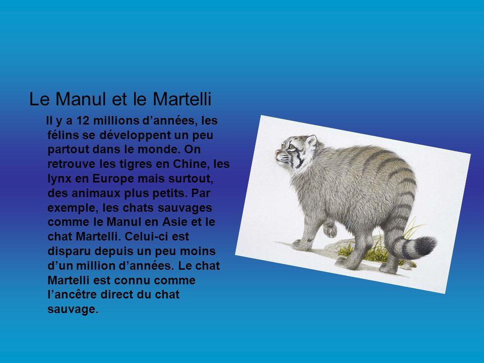 Le Manul et le Martelli