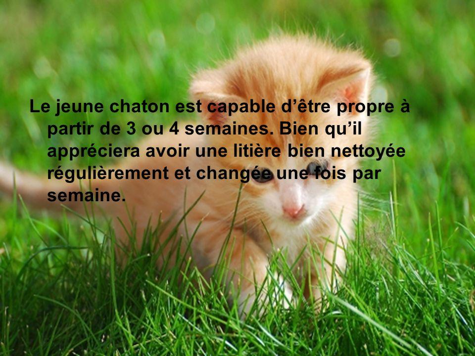 Le jeune chaton est capable d'être propre à partir de 3 ou 4 semaines