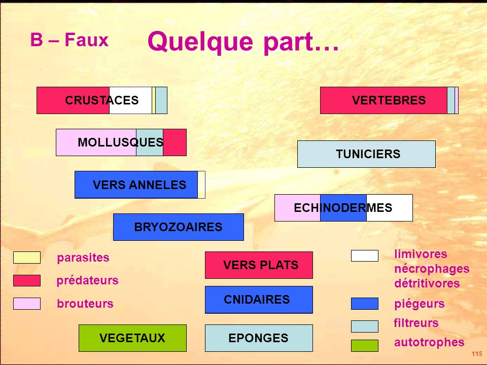 Quelque part… B – Faux CRUSTACES VERTEBRES MOLLUSQUES TUNICIERS