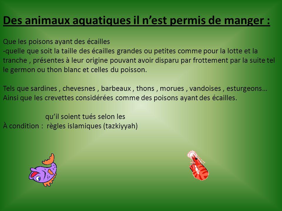 Des animaux aquatiques il n'est permis de manger :