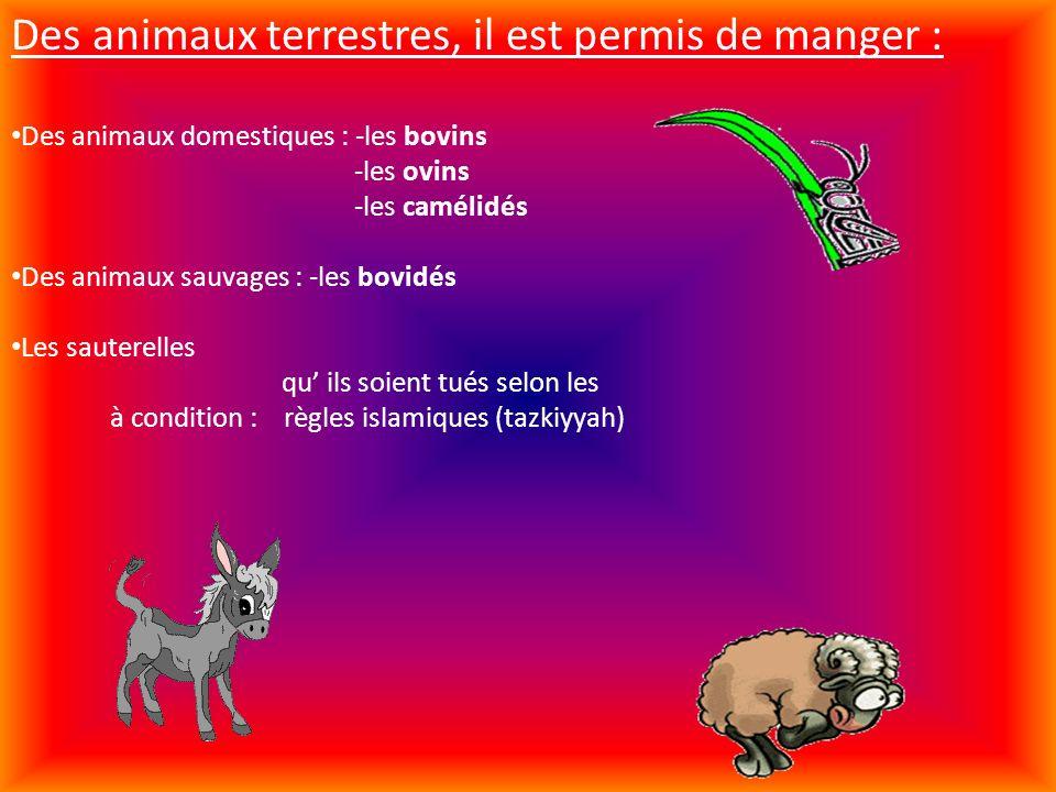 Des animaux terrestres, il est permis de manger :