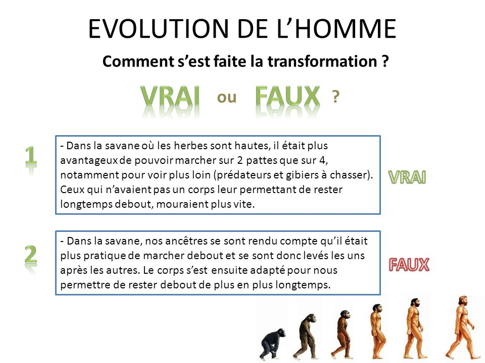 EVOLUTION DE L'HOMME Vrai FAux 1 2 ou VRAI FAUX