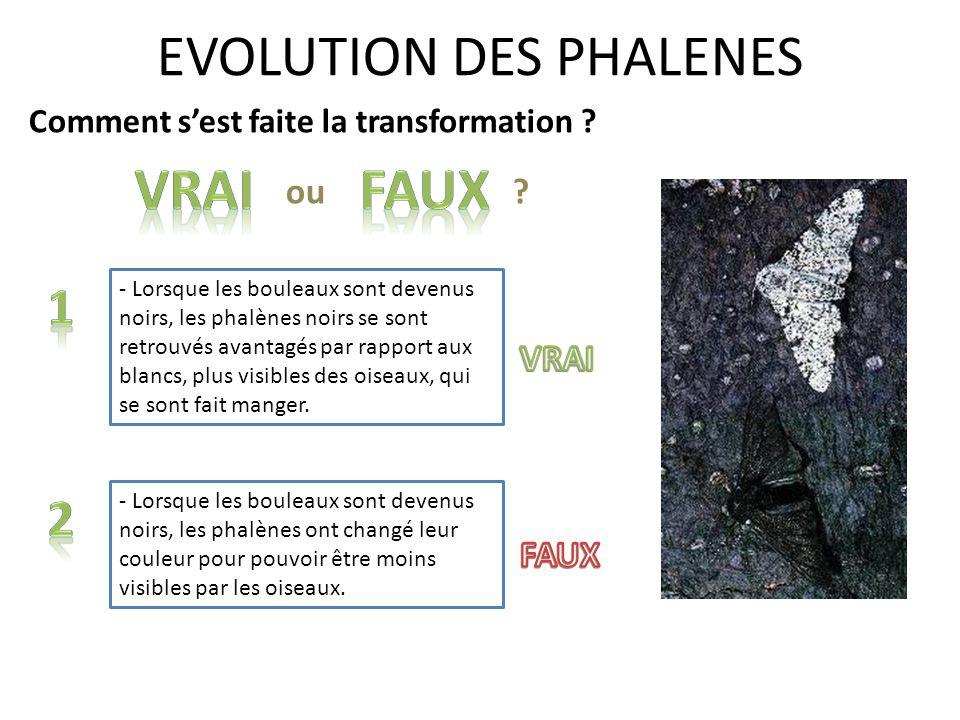 EVOLUTION DES PHALENES