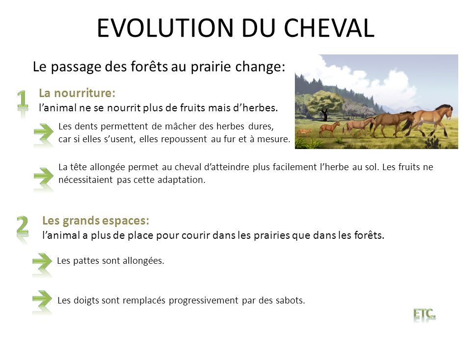 EVOLUTION DU CHEVAL 1 2    