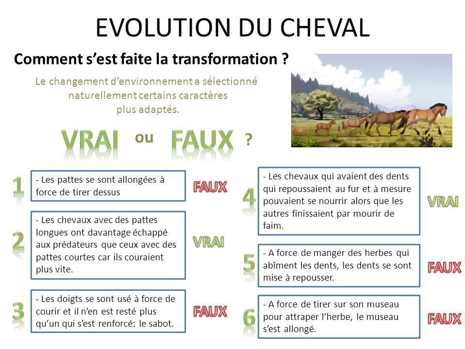 EVOLUTION DU CHEVAL Vrai FAux 1 4 2 5 3 6 ou
