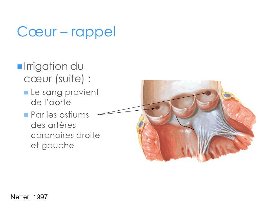 Cœur – rappel Irrigation du cœur (suite) : Le sang provient de l'aorte