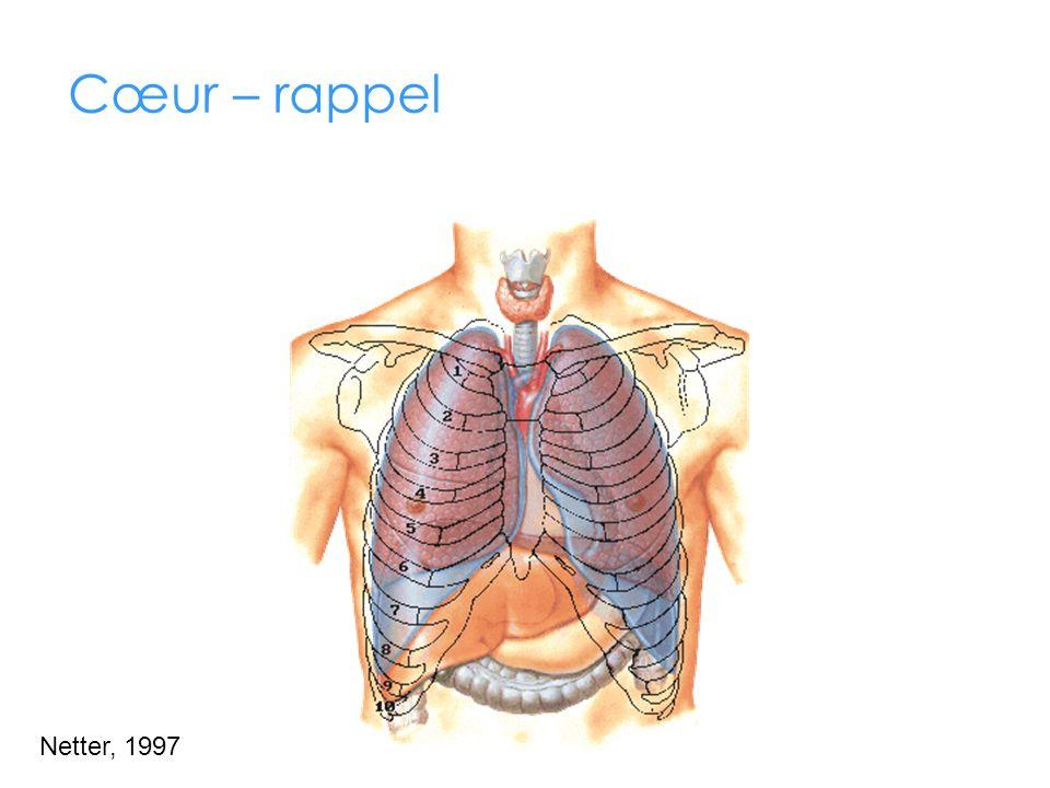 Cœur – rappel Le cœur est situé dans le médiastin (région centrale du thorax) et alimente constamment le corps et les poumons en sang.