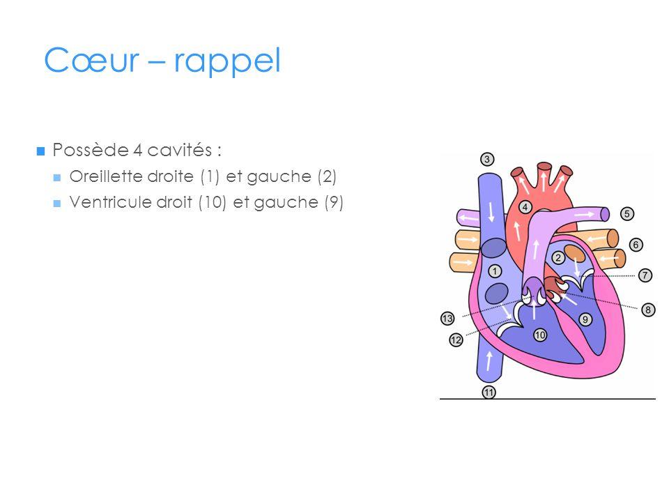 Cœur – rappel Possède 4 cavités : Oreillette droite (1) et gauche (2)