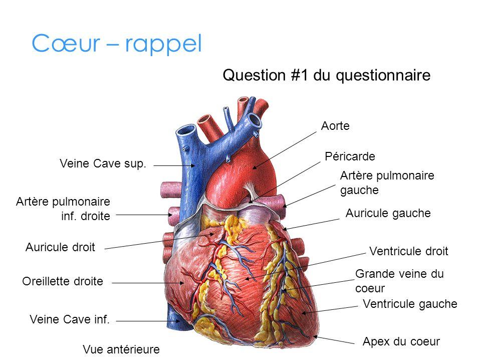 Cœur – rappel Question #1 du questionnaire Aorte Péricarde