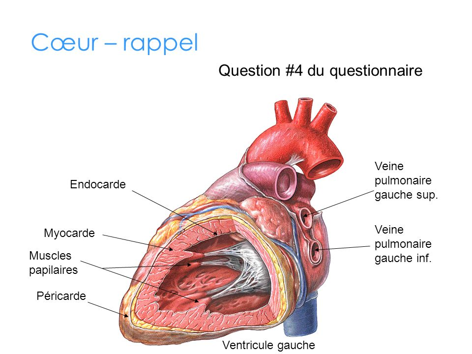 Cœur – rappel Question #4 du questionnaire