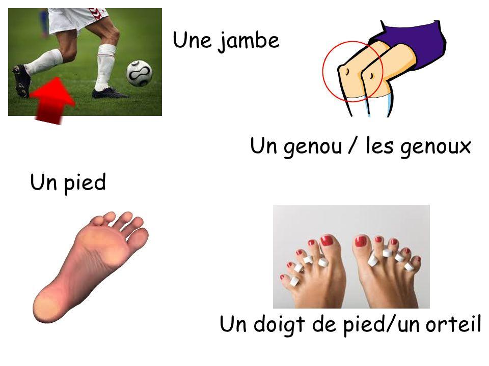 Une jambe Un genou / les genoux Un pied Un doigt de pied/un orteil