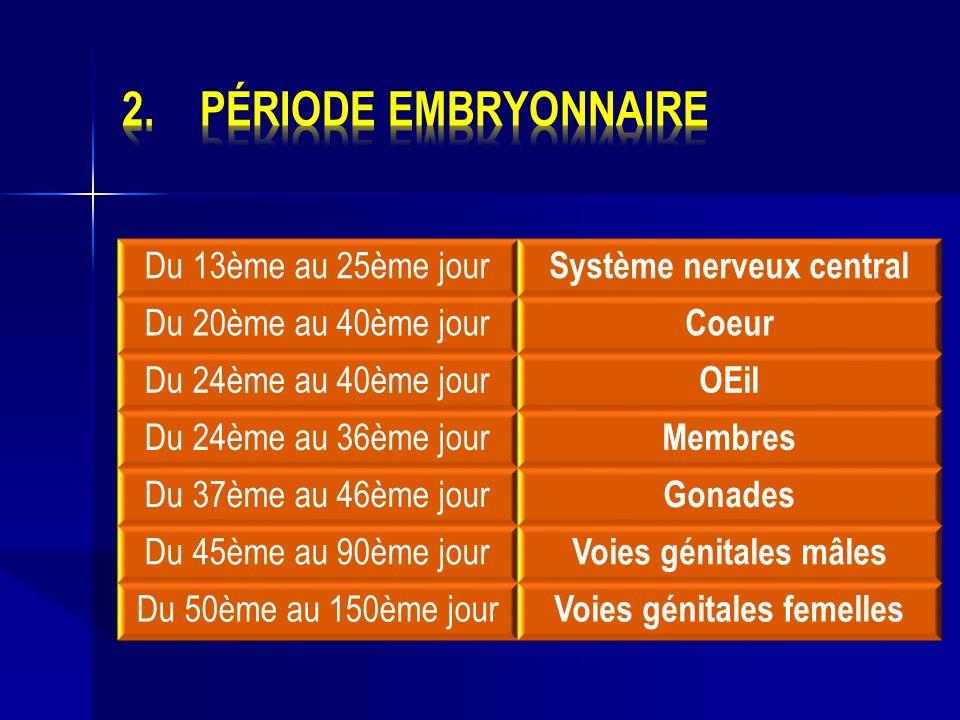Système nerveux central Voies génitales femelles