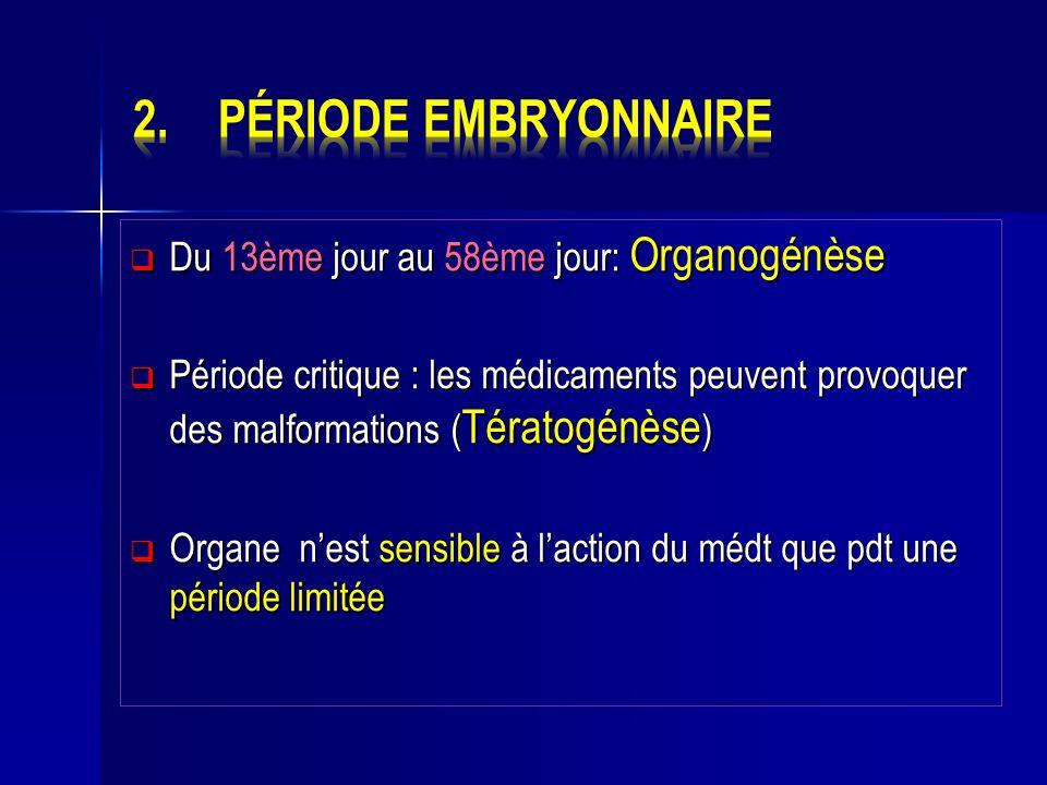 Période embryonnaire Du 13ème jour au 58ème jour: Organogénèse