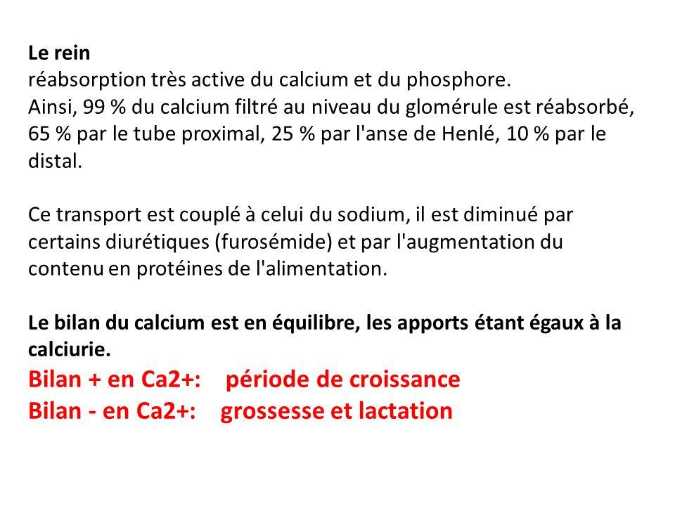 Bilan + en Ca2+: période de croissance