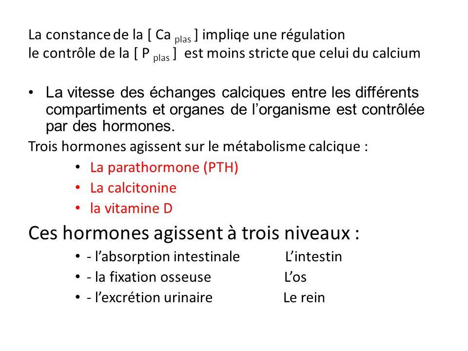 Ces hormones agissent à trois niveaux :