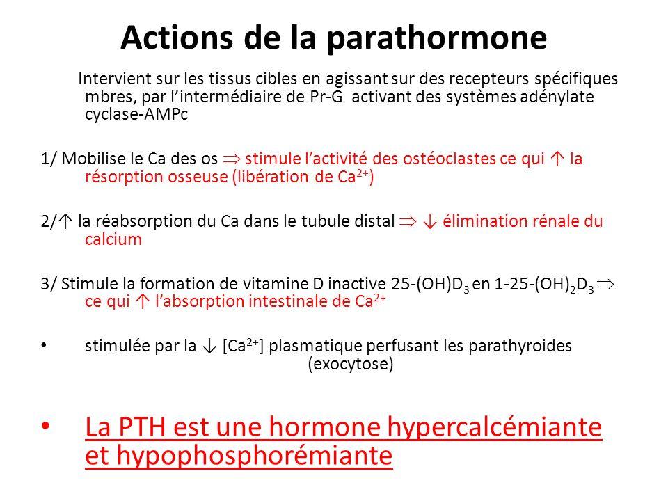 Actions de la parathormone