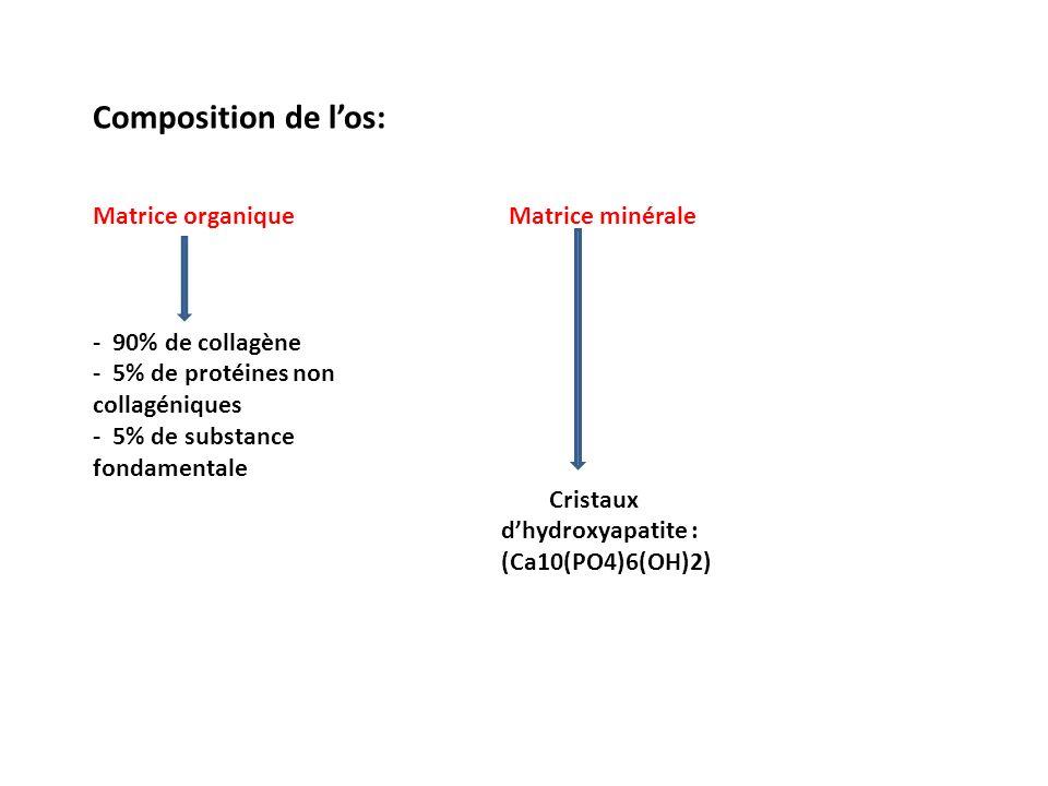 Composition de l'os: Matrice organique Matrice minérale