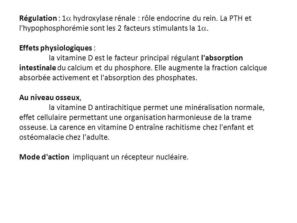 Régulation : 1a hydroxylase rénale : rôle endocrine du rein