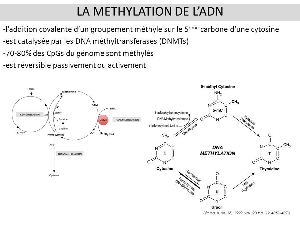 La methylation de l'ADN