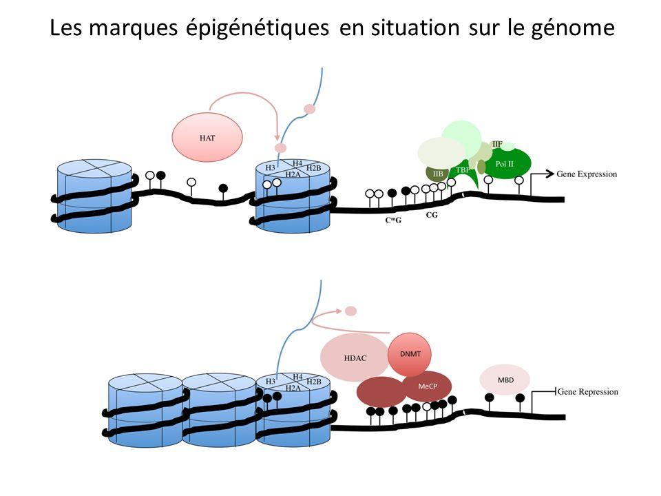 Les marques épigénétiques en situation sur le génome
