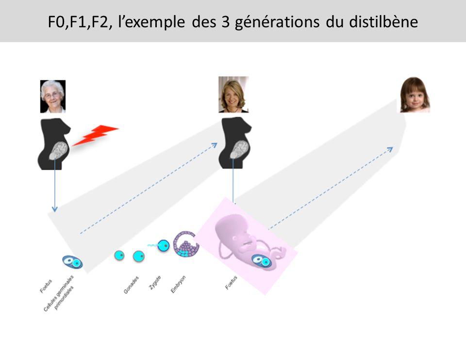 F0,F1,F2, l'exemple des 3 générations du distilbène