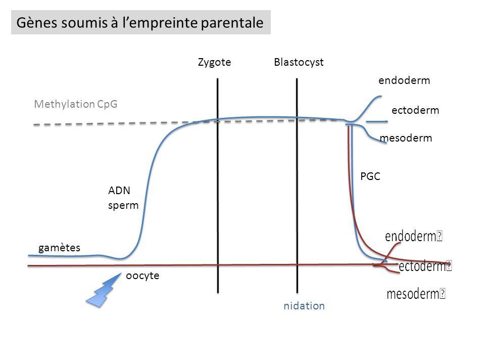 Gènes soumis à l'empreinte parentale
