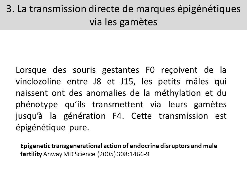 3. La transmission directe de marques épigénétiques via les gamètes