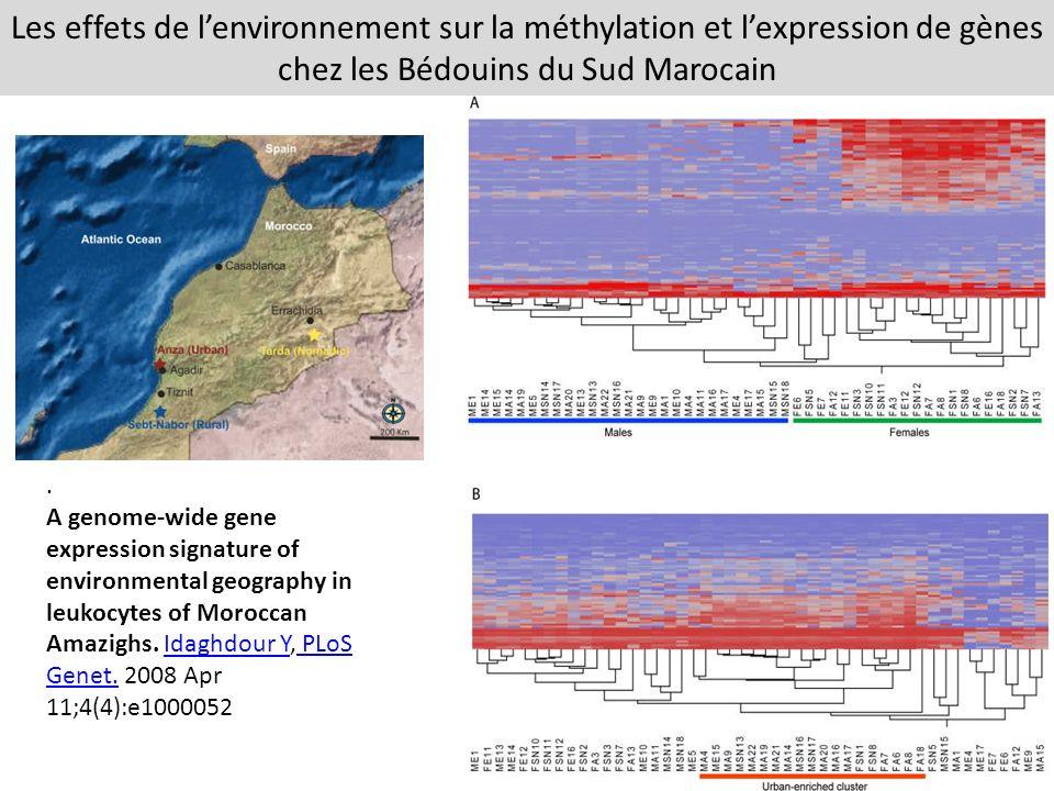 Les effets de l'environnement sur la méthylation et l'expression de gènes chez les Bédouins du Sud Marocain