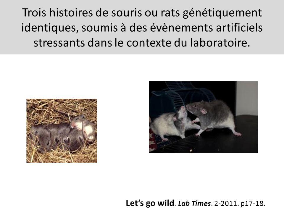 Trois histoires de souris ou rats génétiquement identiques, soumis à des évènements artificiels stressants dans le contexte du laboratoire.