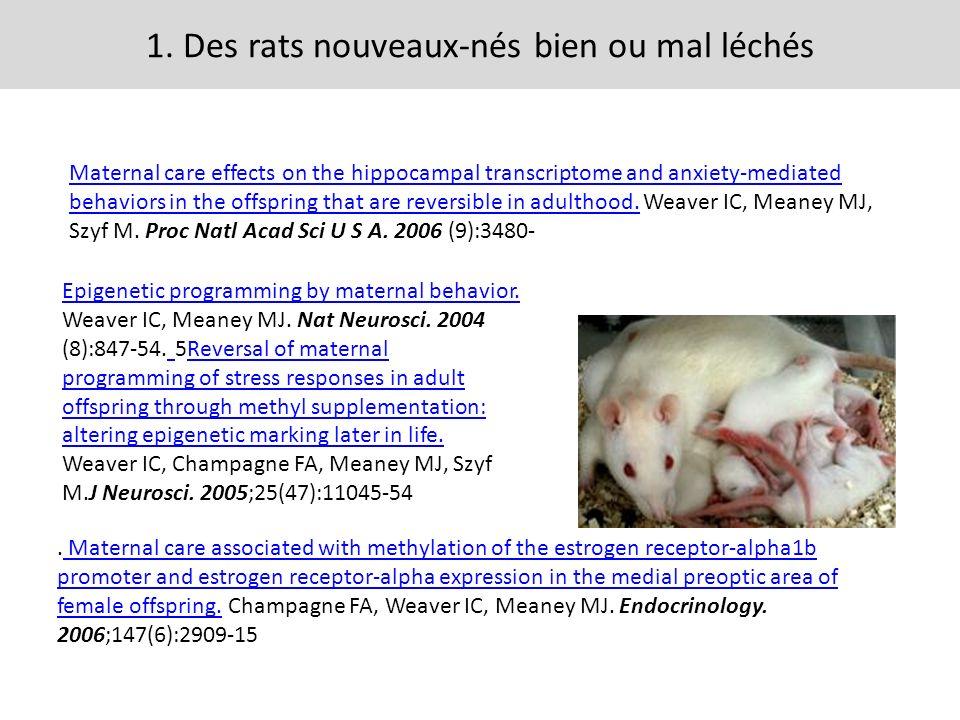 1. Des rats nouveaux-nés bien ou mal léchés