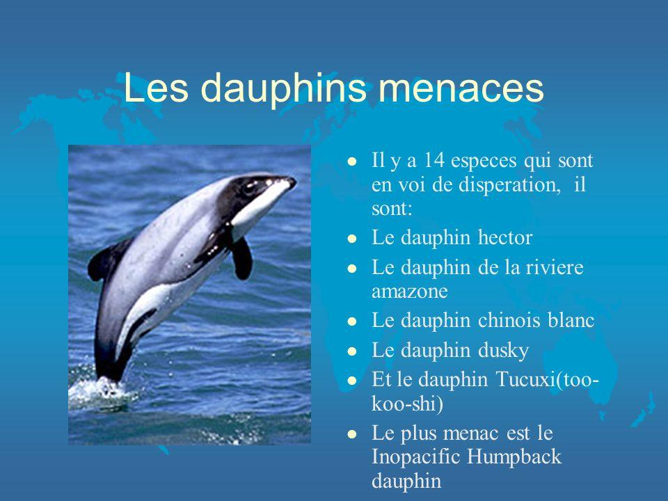 Les dauphins menaces Il y a 14 especes qui sont en voi de disperation, il sont: Le dauphin hector.
