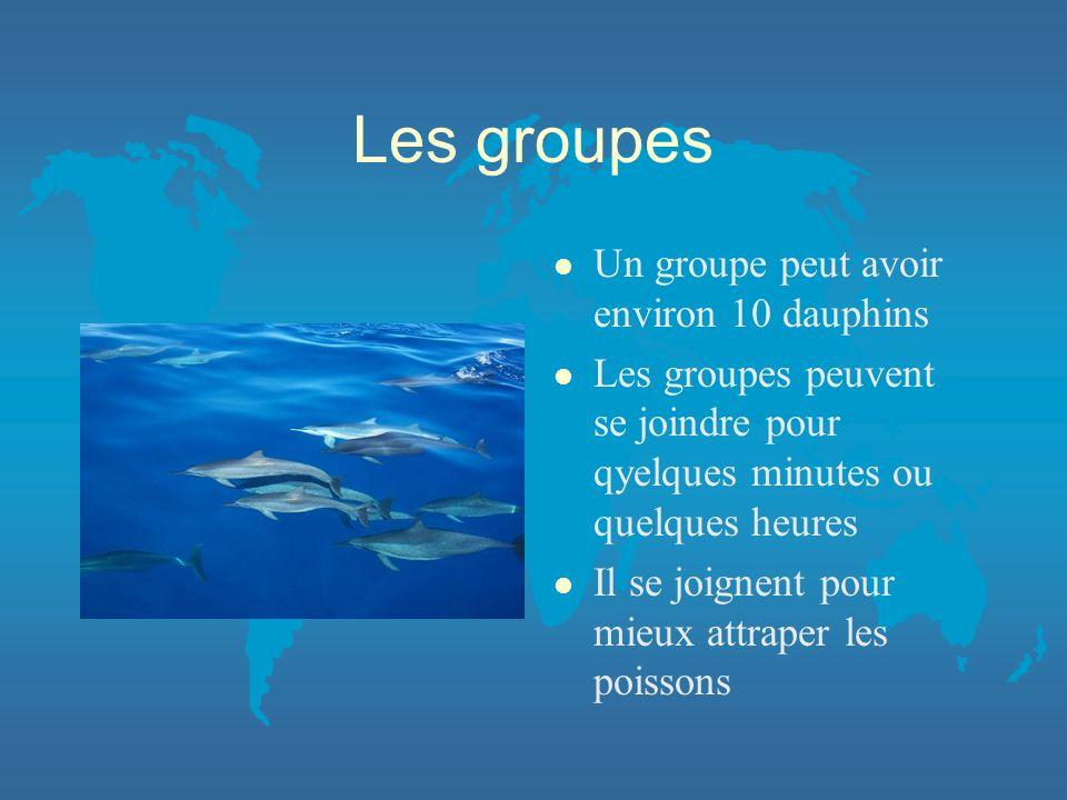Les groupes Un groupe peut avoir environ 10 dauphins