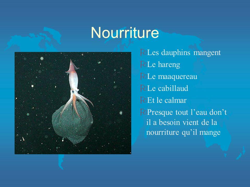 Nourriture Les dauphins mangent Le hareng Le maaquereau Le cabillaud