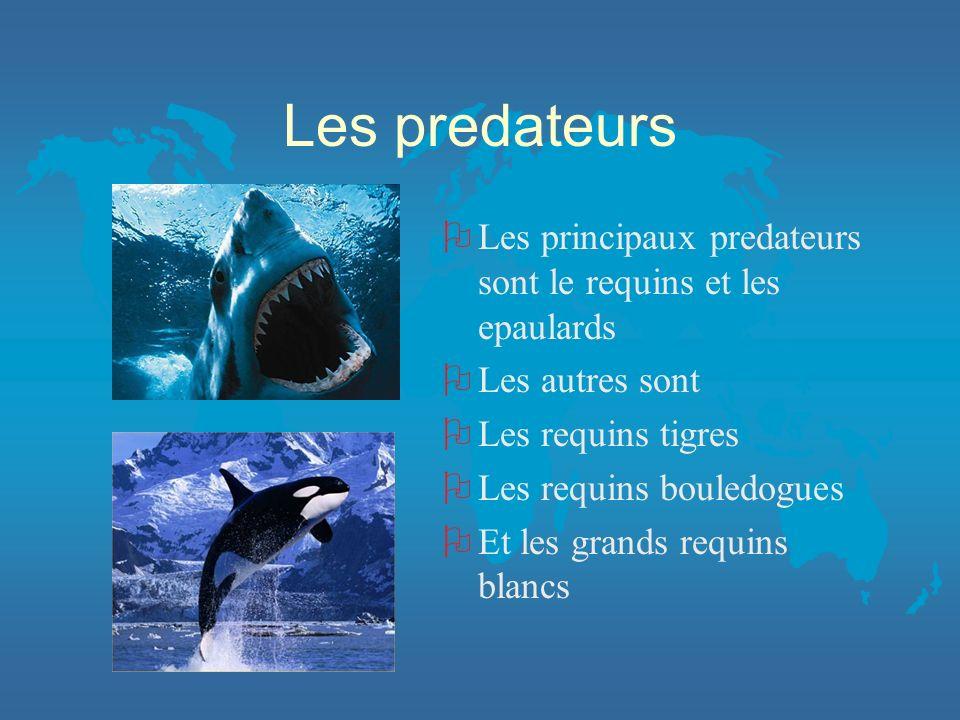 Les predateurs Les principaux predateurs sont le requins et les epaulards. Les autres sont. Les requins tigres.