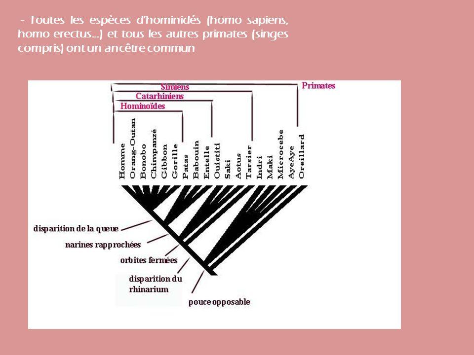 - Toutes les espèces d'hominidés (homo sapiens, homo erectus…) et tous les autres primates (singes compris) ont un ancêtre commun