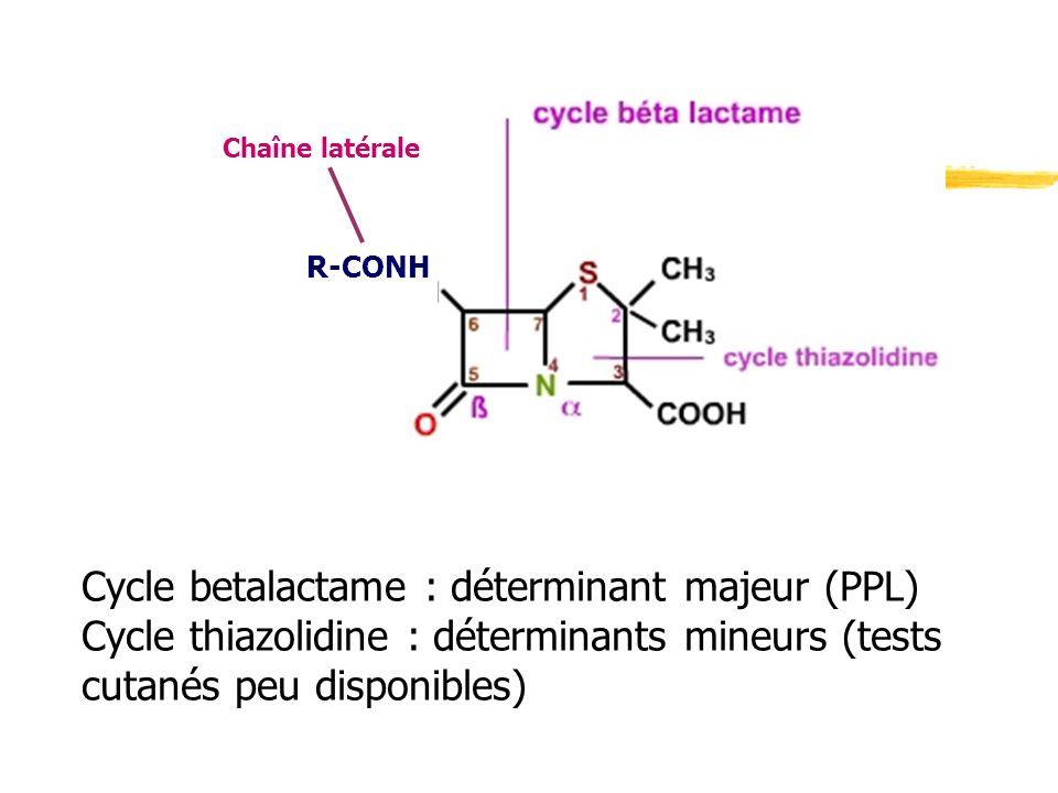 Cycle betalactame : déterminant majeur (PPL)