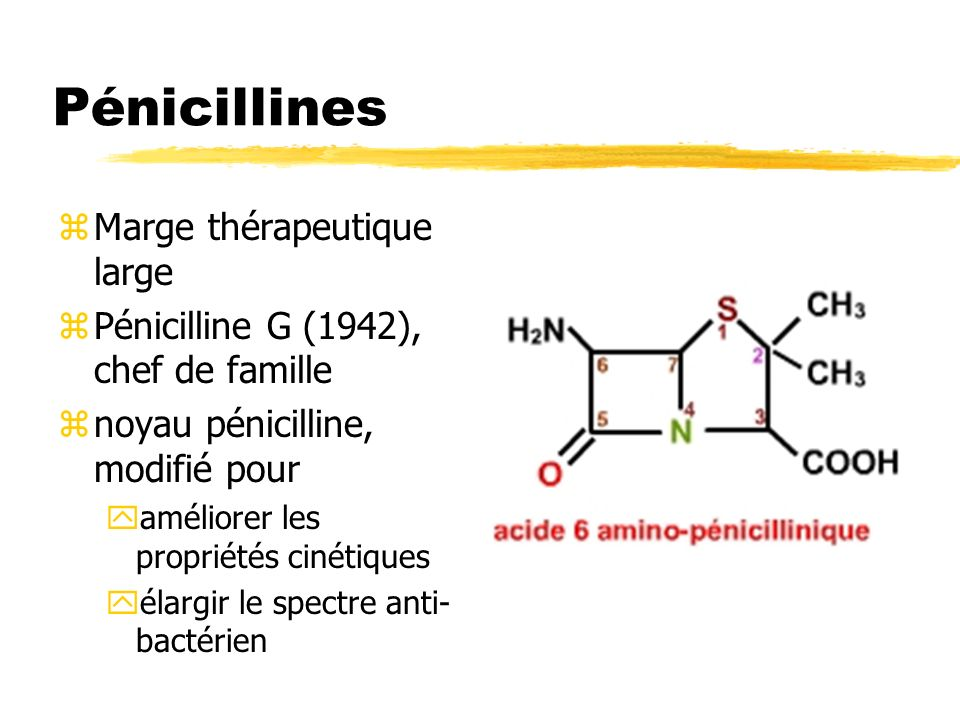Pénicillines Marge thérapeutique large