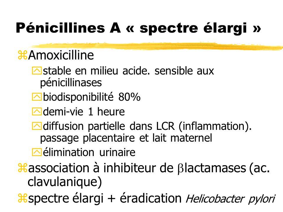 Pénicillines A « spectre élargi »