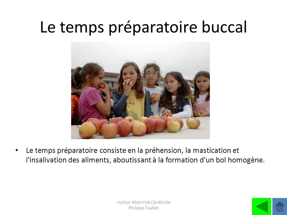 Le temps préparatoire buccal