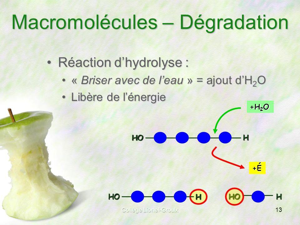 Macromolécules – Dégradation