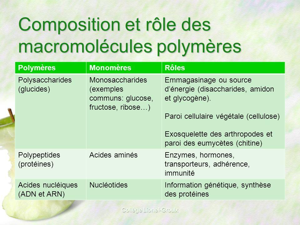 Composition et rôle des macromolécules polymères