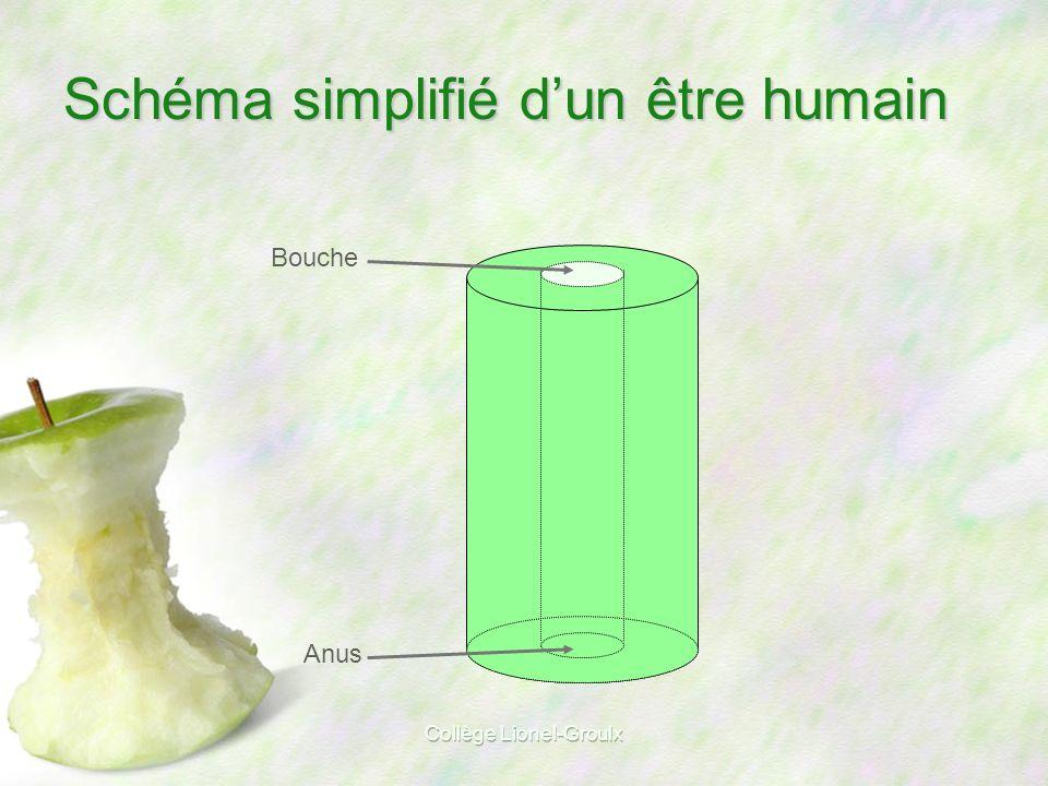 Schéma simplifié d'un être humain