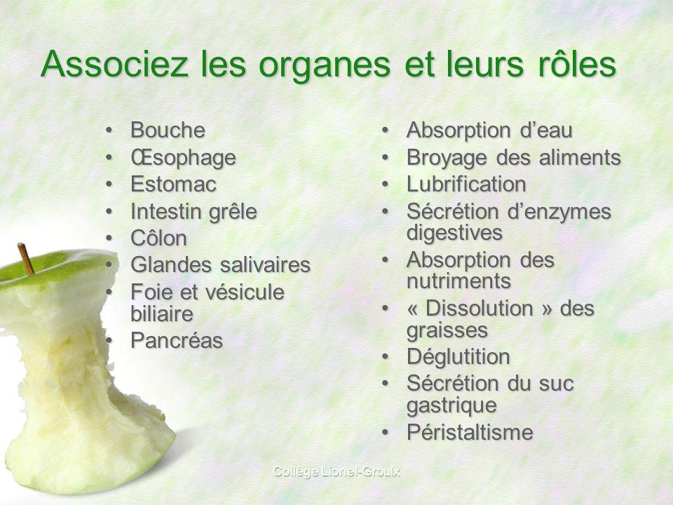 Associez les organes et leurs rôles