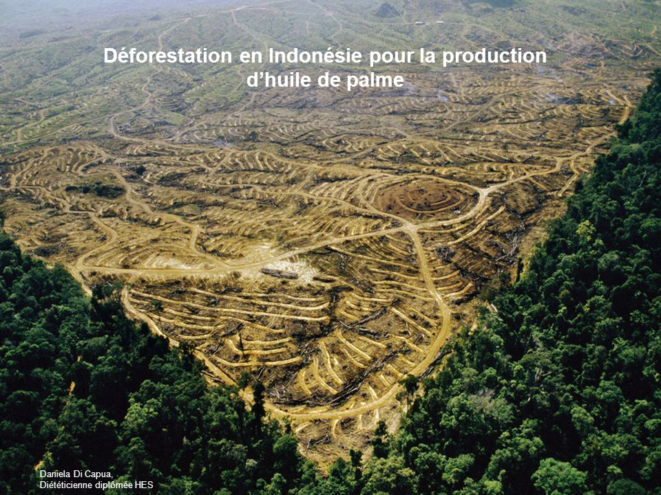 Déforestation en Indonésie pour la production