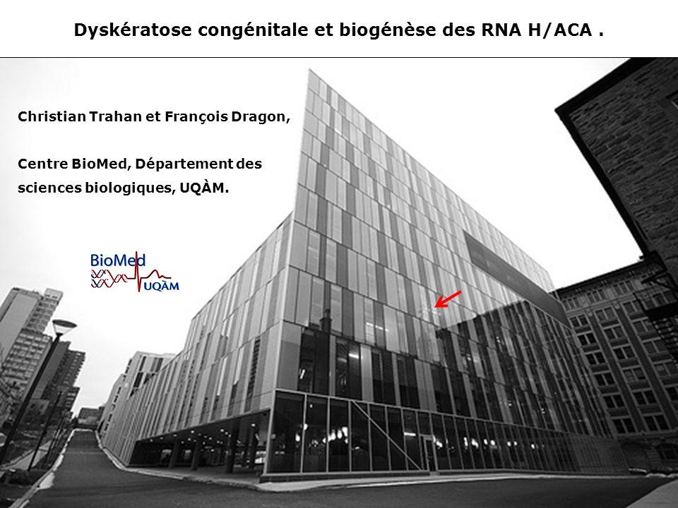 Dyskératose congénitale et biogénèse des RNA H/ACA .