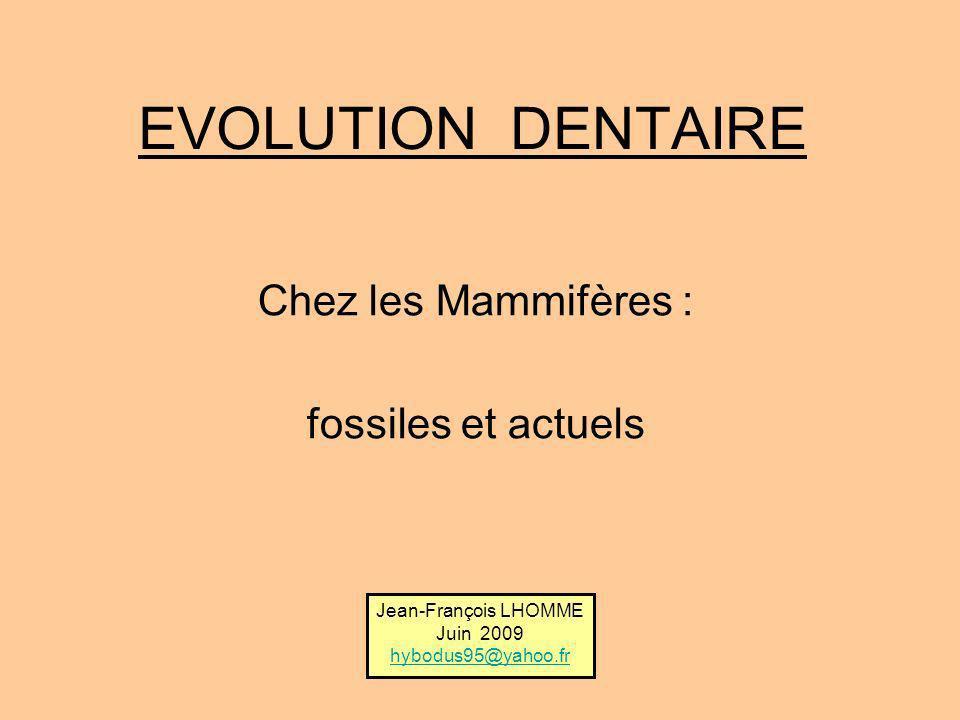 Chez les Mammifères : fossiles et actuels