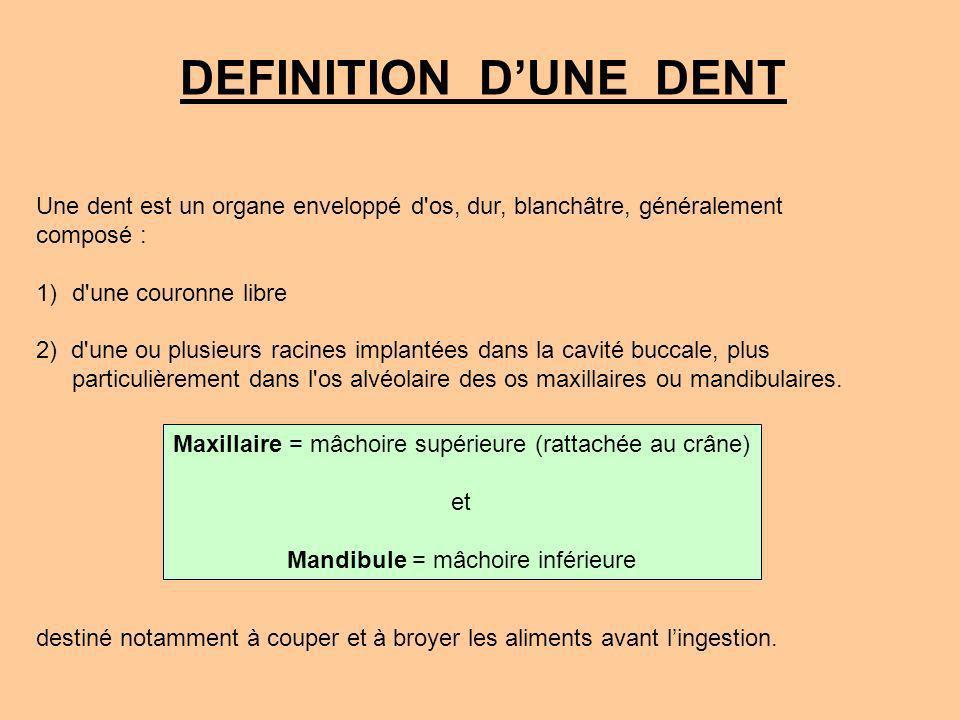 DEFINITION D'UNE DENT Une dent est un organe enveloppé d os, dur, blanchâtre, généralement. composé :