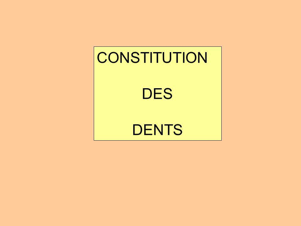 CONSTITUTION DES DENTS