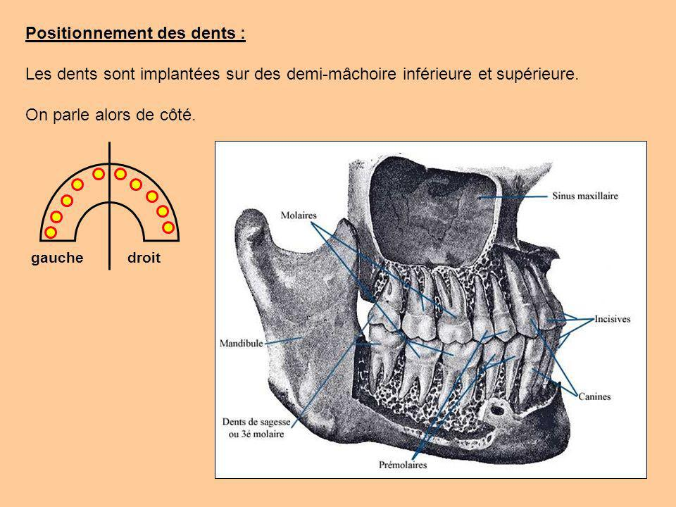 Positionnement des dents :