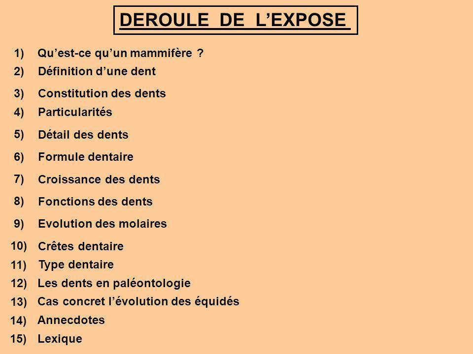 DEROULE DE L'EXPOSE 1) Qu'est-ce qu'un mammifère 2)